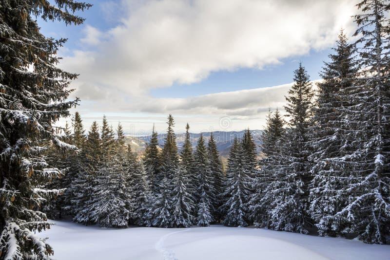 Paisaje del invierno de la Navidad Los abetos altos hermosos cubrieron ingenio imagenes de archivo