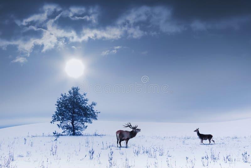 Paisaje del invierno en color azul Árbol solo y varón y hembra salvajes de los ciervos en un campo nevoso foto de archivo