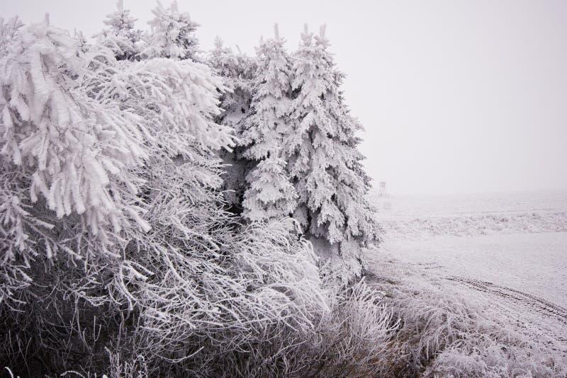 Paisaje del invierno en el bosque con los árboles cubiertos con blanco imágenes de archivo libres de regalías