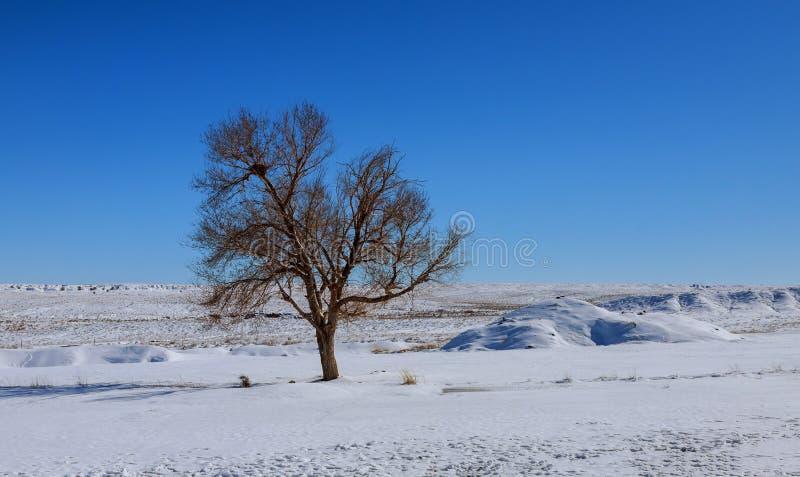 Paisaje del invierno en el día escarchado fotografía de archivo libre de regalías