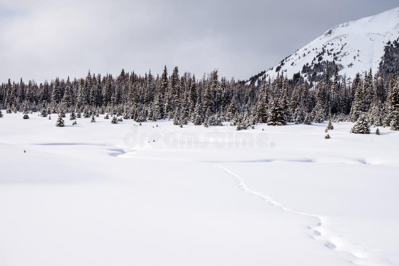 Paisaje del invierno en el país de Kananaskis cerca del soporte Chester fotografía de archivo
