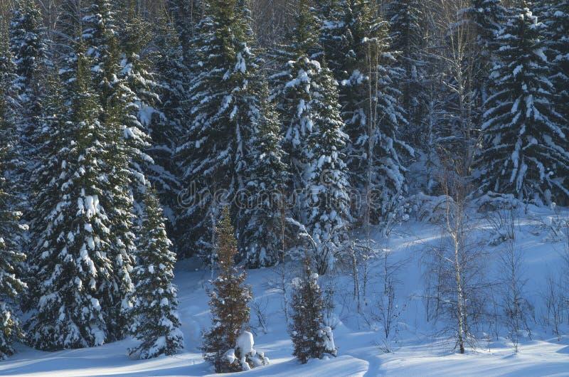 Paisaje del invierno en la madera imagen de archivo