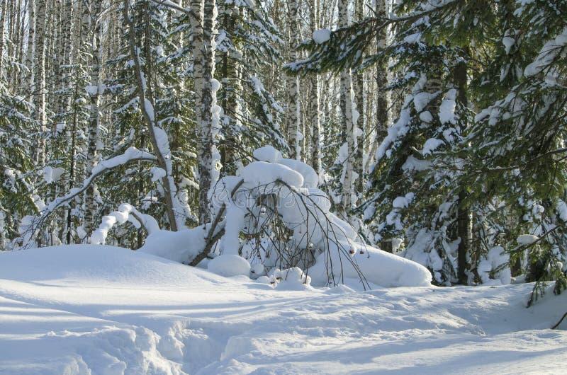Paisaje del invierno en la madera fotos de archivo