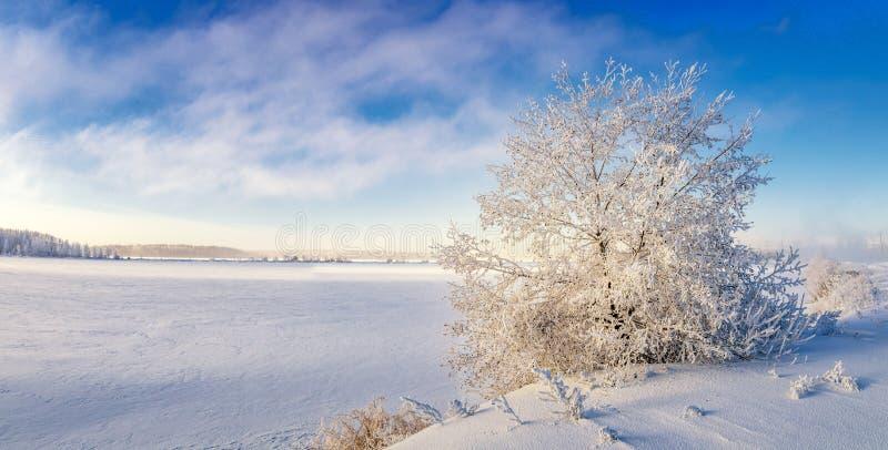 Paisaje del invierno en la orilla de un lago congelado con un árbol en helada, Rusia, Ural foto de archivo libre de regalías