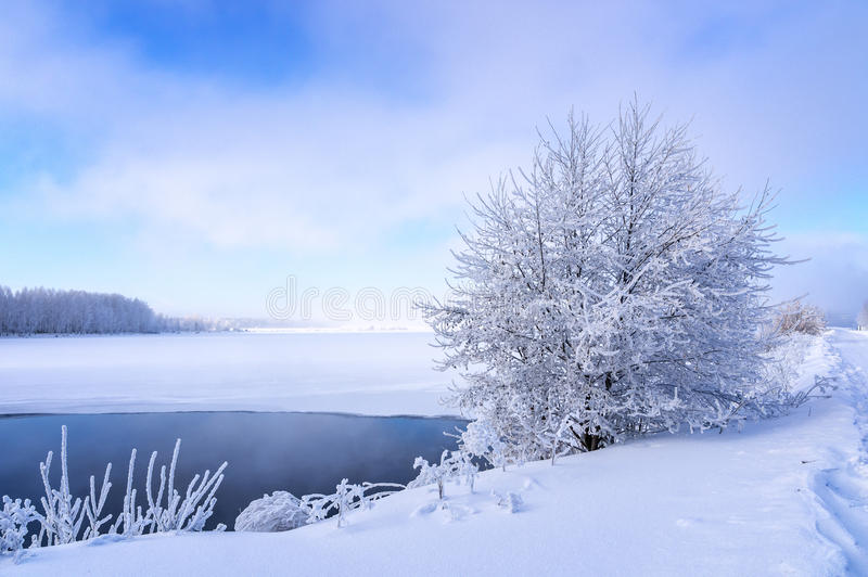 Paisaje del invierno en la orilla de un lago congelado con un árbol en helada, Rusia, Ural imágenes de archivo libres de regalías