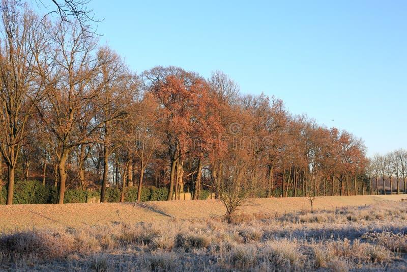 Paisaje del invierno en la provincia Limburgo, los Países Bajos imagenes de archivo