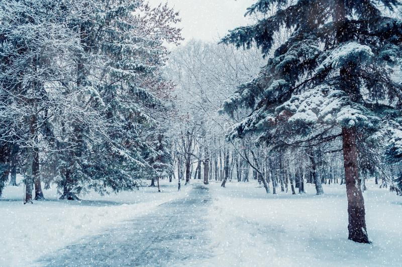 Paisaje del invierno Los árboles Nevado a lo largo del invierno parquean debajo de nieve que cae foto de archivo
