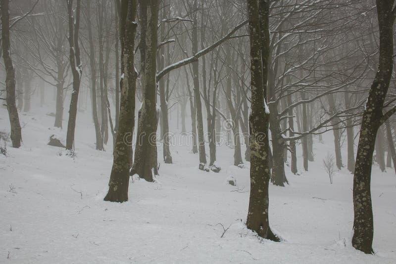 Paisaje del invierno Los árboles del invierno Nevado a lo largo del invierno parquean debajo de nieve que cae imagen de archivo