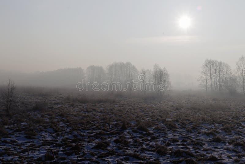 Paisaje del invierno, mañana fría brumosa fotografía de archivo