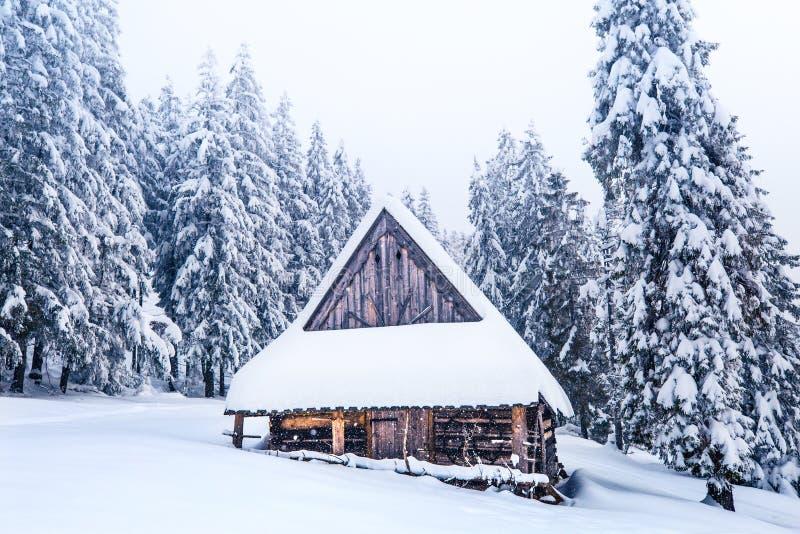 Paisaje del invierno Naturaleza del invierno Árboles y casa vieja cubiertos por la nieve mullida blanca fotos de archivo libres de regalías