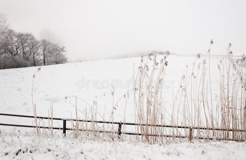 Paisaje del invierno Nevado con una cerca y acometidas foto de archivo
