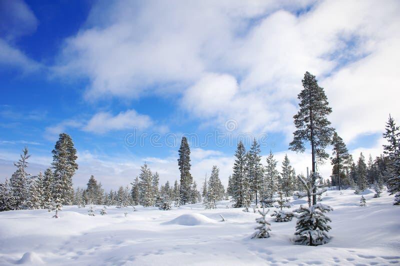 Paisaje del invierno Nevado en Finlandia imagen de archivo