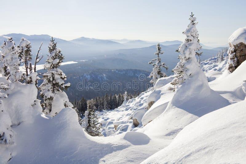Paisaje del invierno Piceas y nieves acumulada por la ventisca nevadas fotos de archivo