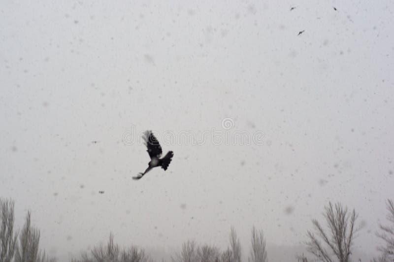 Paisaje del invierno - tormenta de la nieve, árboles nevados y pájaros negros imagen de archivo