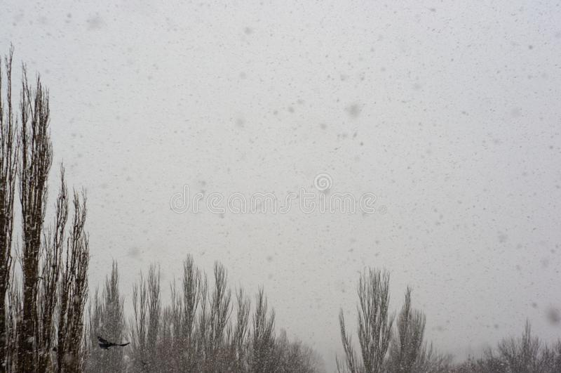 Paisaje del invierno - tormenta de la nieve, árboles nevados y pájaros negros imagen de archivo libre de regalías