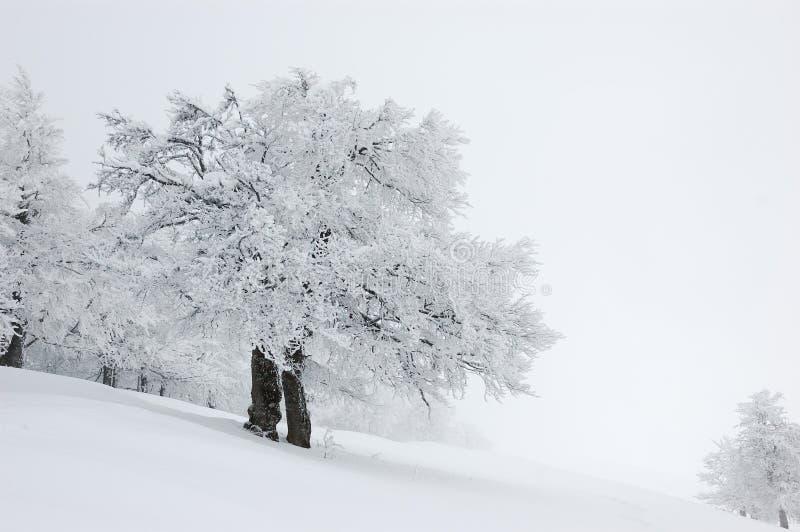 Paisaje del invierno, Ucrania foto de archivo libre de regalías