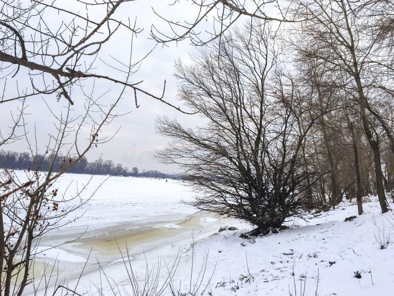 Paisaje del invierno: un río cubierto con hielo, árboles y arbustos en la orilla imagenes de archivo