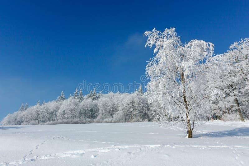 Paisaje del invierno Una situación del árbol en el medio de una escarcha nevada se cubre con helada en un escarchado soleado fotos de archivo