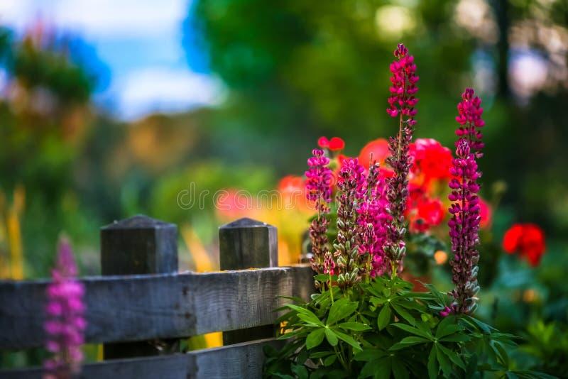 Paisaje del jardín con las flores hermosas y la yarda de madera fotografía de archivo
