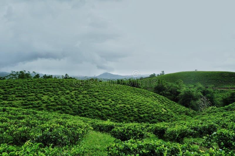 Paisaje del jardín de té imagen de archivo