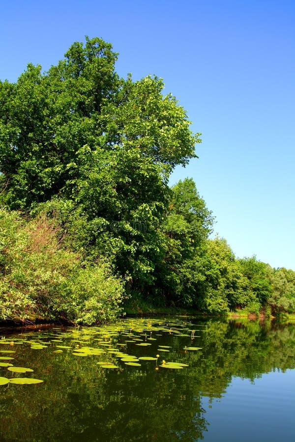 Paisaje del lago del verano de la belleza imagenes de archivo