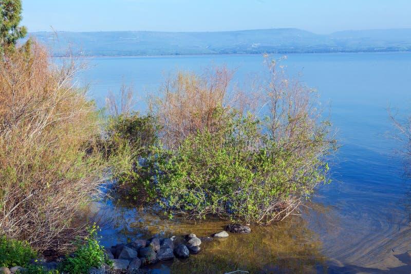 Paisaje del lago Kinneret - mar de Galilea foto de archivo
