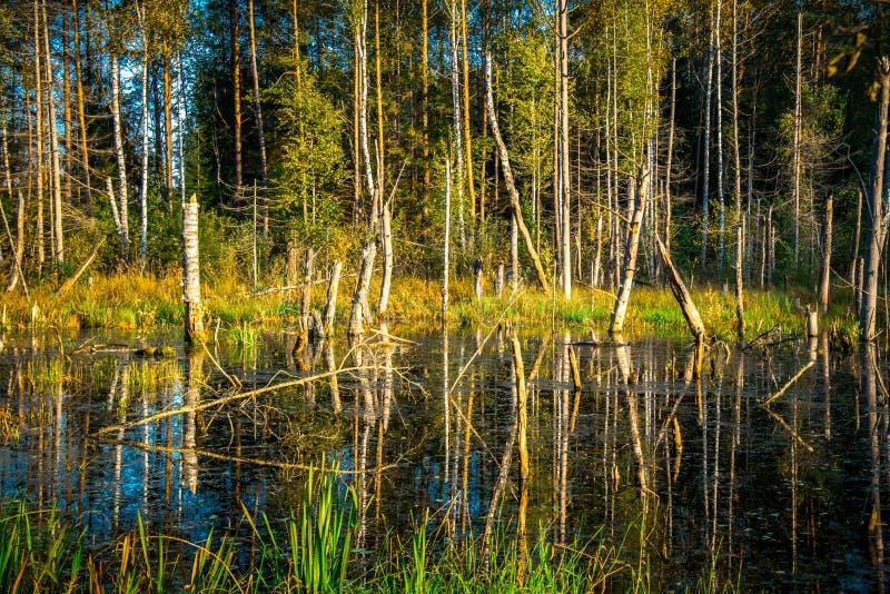 Paisaje del lago swamp imágenes de archivo libres de regalías