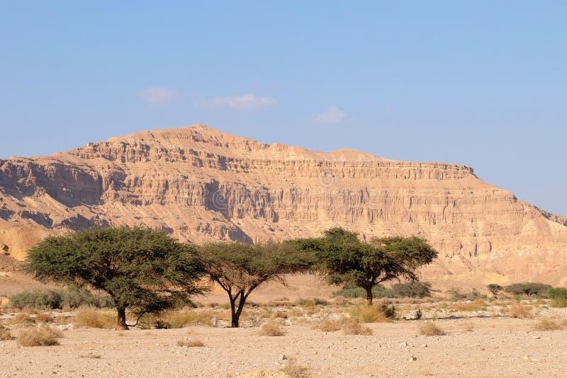Paisaje del lecho de un río seco del desierto del Néguev foto de archivo libre de regalías
