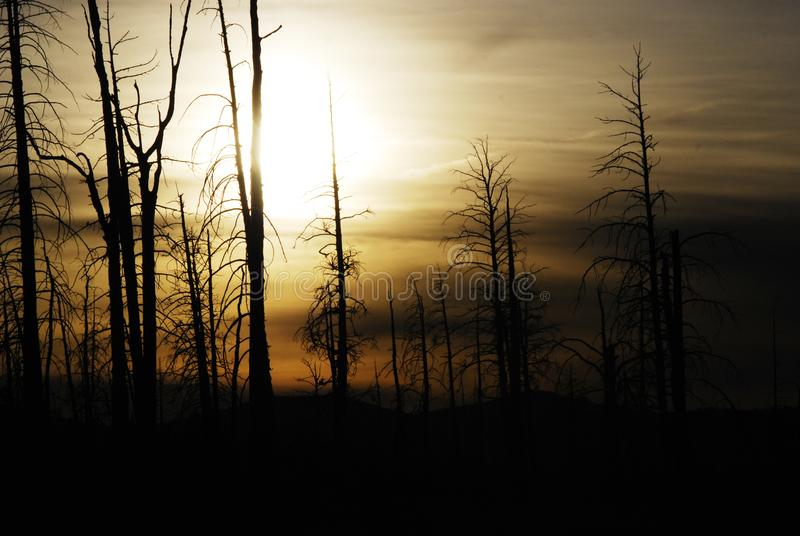Paisaje del misterio de una silueta oscura del árbol foto de archivo