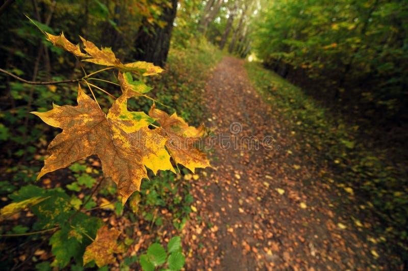Paisaje del otoño, cierre para arriba en las hojas imagenes de archivo