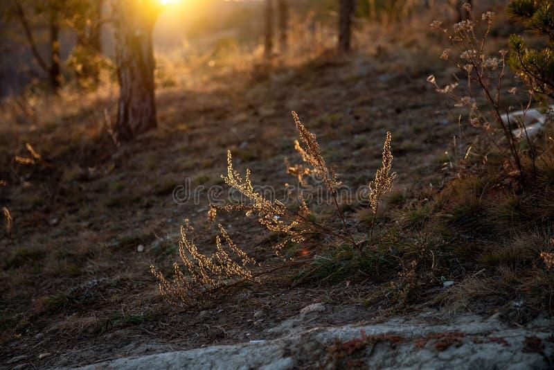 Paisaje del otoño con árboles y un río ancho Rayos de Sun a través de ramificaciones de árbol foto de archivo libre de regalías