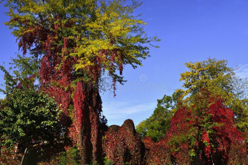 Paisaje del otoño con colores del brifght imagen de archivo