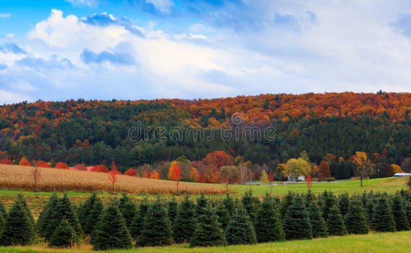 Paisaje del otoño con el bosque, el campo y el cielo. imagen de archivo