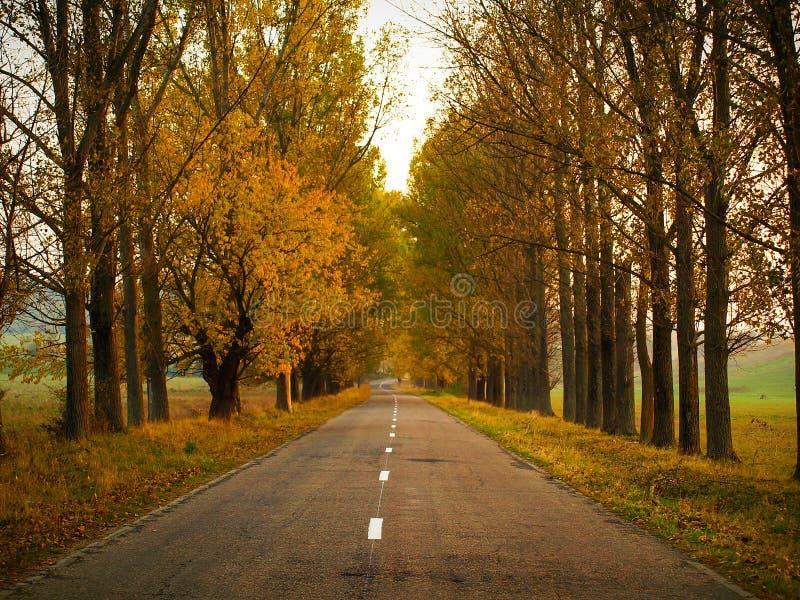 Paisaje del otoño con la carretera y los árboles rectos de asfalto con follaje anaranjado y amarillo en Altringen, condado de Tim imagenes de archivo