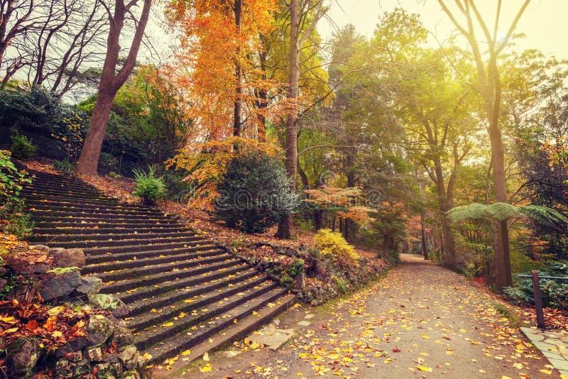 Paisaje del otoño con la escalera y el sendero largos imagenes de archivo