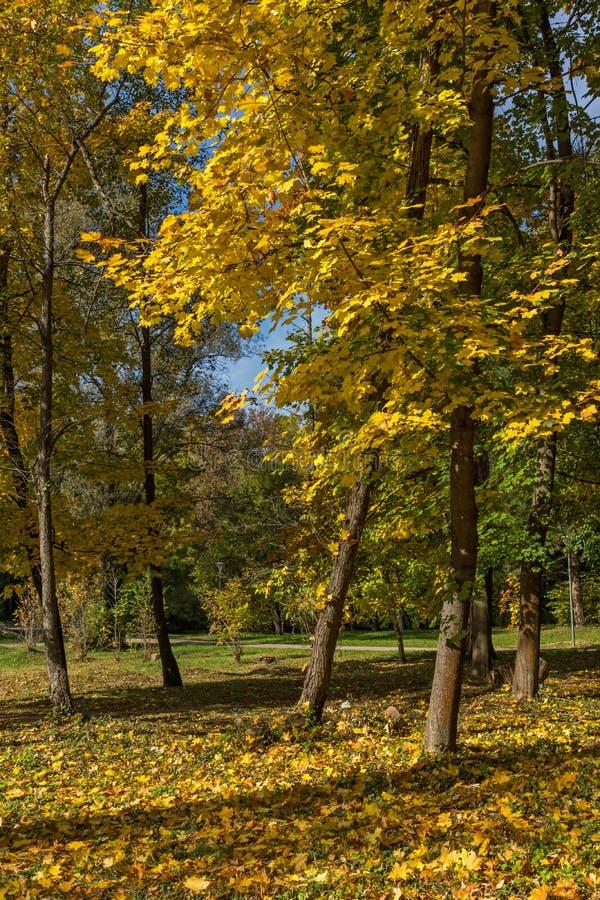 Paisaje del otoño con los árboles amarillos en South Park, Sofía, Bulgaria fotos de archivo libres de regalías