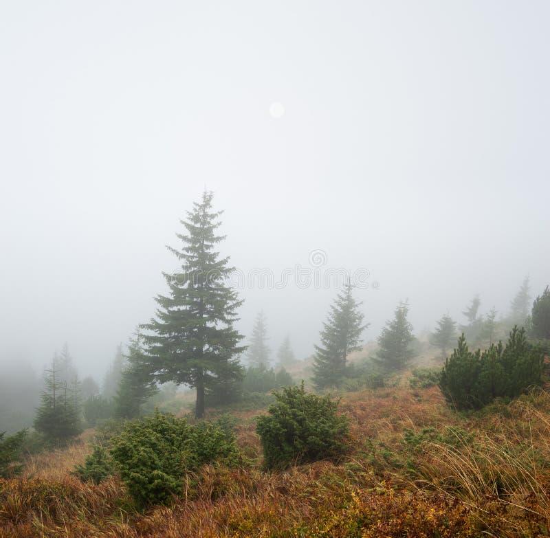 Paisaje del otoño con niebla imágenes de archivo libres de regalías
