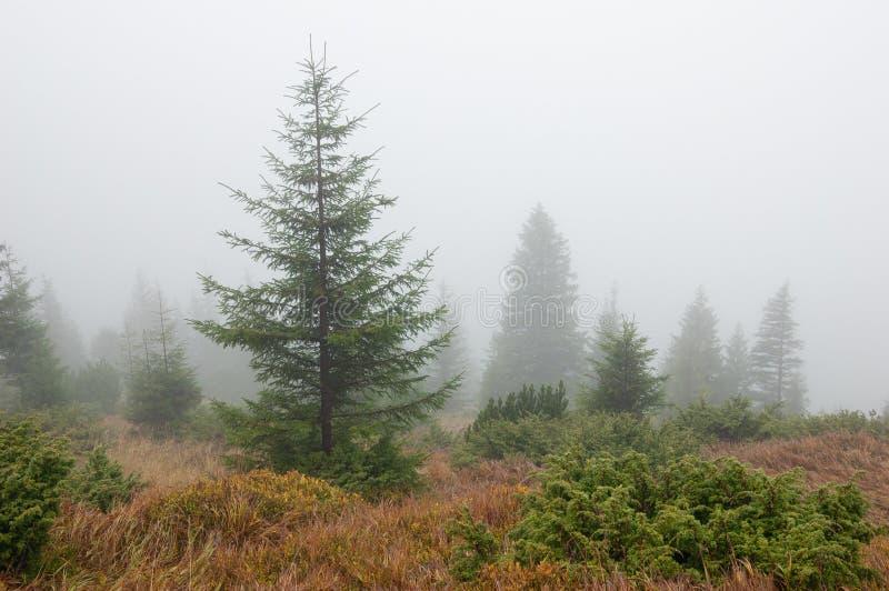 Paisaje del otoño con niebla fotografía de archivo