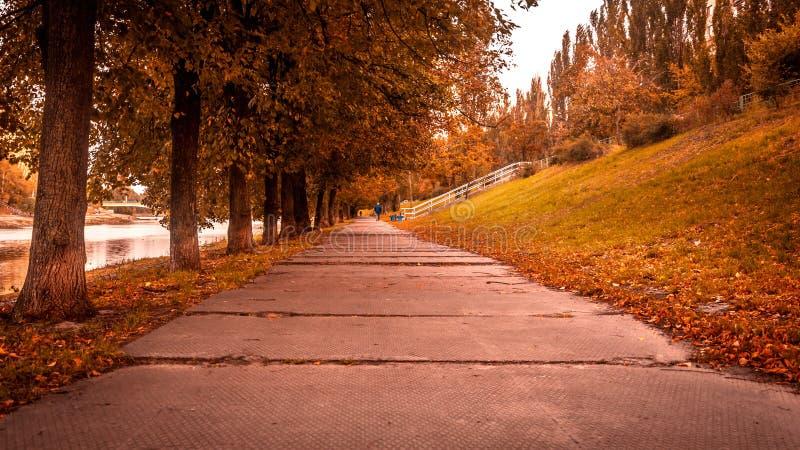 Paisaje del otoño con un camino hermoso con los árboles del ellow fotos de archivo libres de regalías