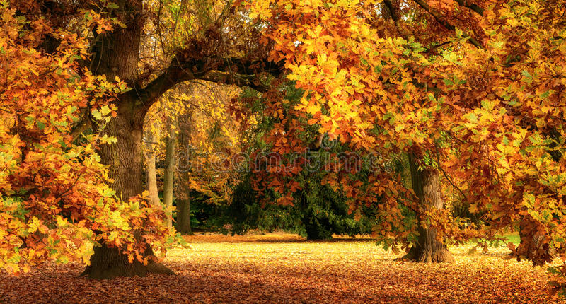 Paisaje del otoño con un roble magnífico foto de archivo