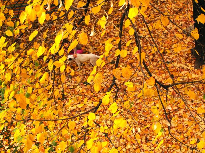 Paisaje del otoño con una pequeña figura de un niño Hojas del amarillo de un árbol foto de archivo