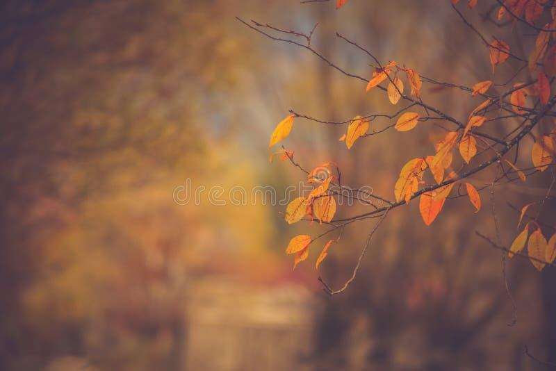 Paisaje del otoño con una rama con pocas hojas amarillo-naranja fotos de archivo