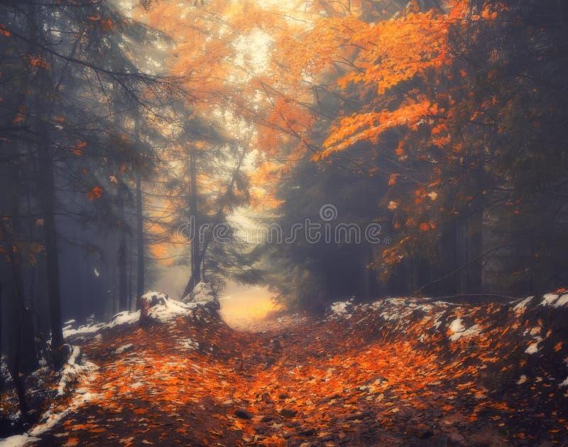Paisaje del otoño de la trayectoria de bosque en una mañana de niebla fotos de archivo