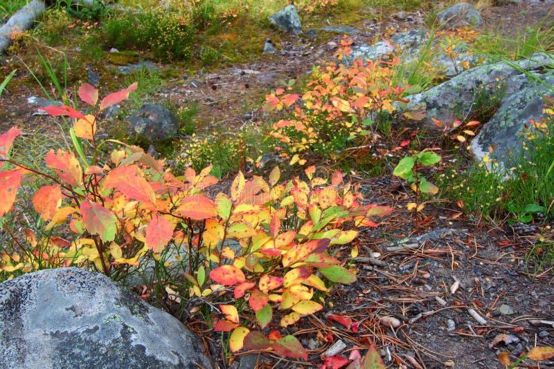 Paisaje del otoño de Montana fotos de archivo