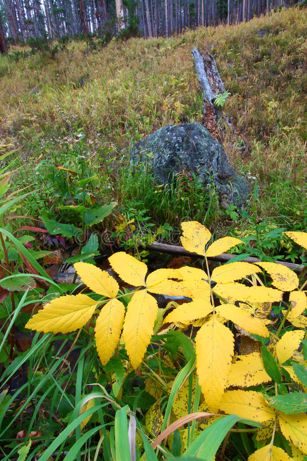 Paisaje del otoño de Montana fotografía de archivo