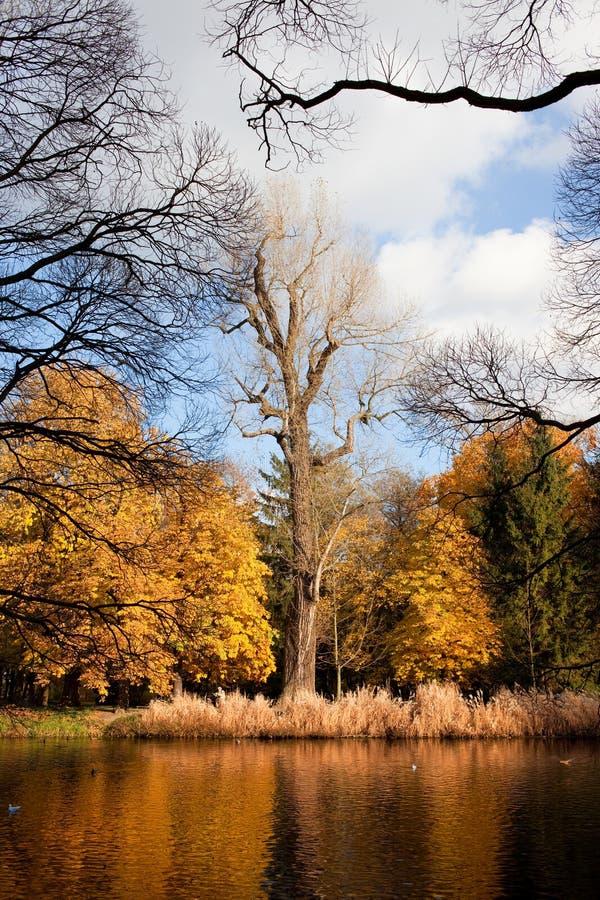 Paisaje del otoño del parque de Lazienki imágenes de archivo libres de regalías