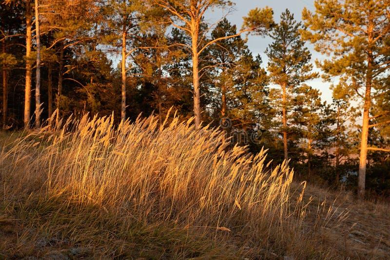 Paisaje del otoño en bosque fotografía de archivo libre de regalías