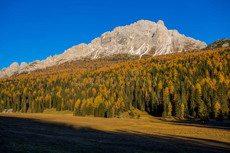 Paisaje del otoño en dolomías, Italia, montañas, abetos y alerces que cambian el color si se asume que el autum amarillo típico fotografía de archivo