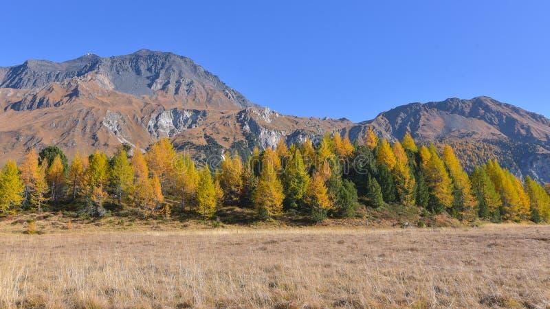 paisaje del otoño en las altas montañas con los alerces amarillos imagen de archivo