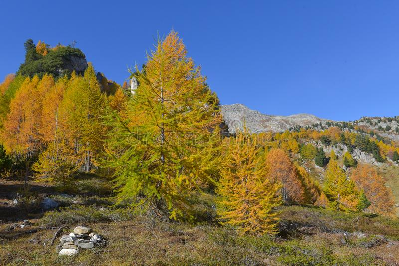 paisaje del otoño en las altas montañas con los alerces amarillos imagenes de archivo